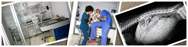 Vetestudio Studio Veterinario Schio Vicenza